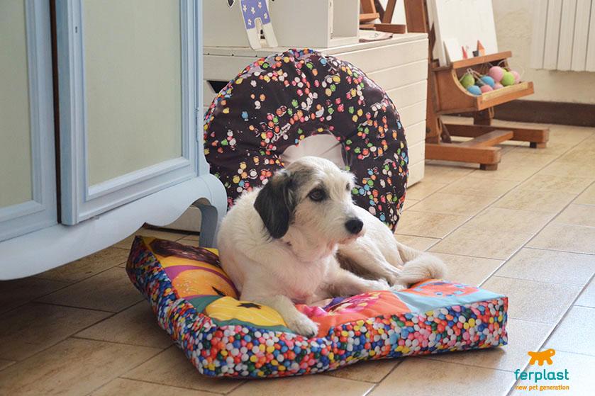 Decora la tua casa con dei divertenti cuscini per cani for Decora la tua casa