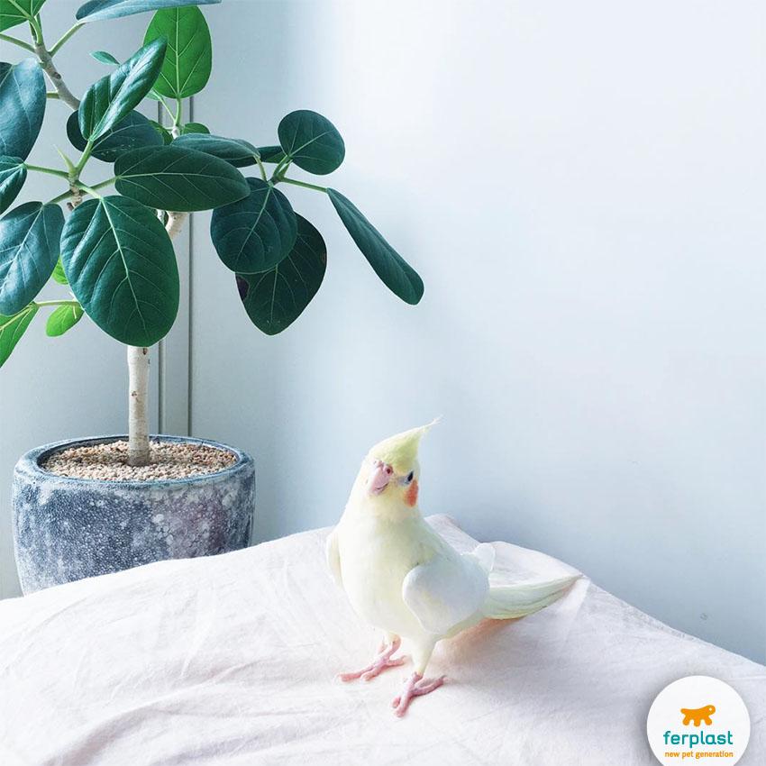 decorare_casa_con_gabbiette_uccelli
