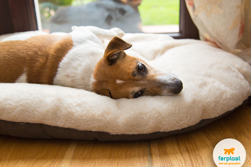 double face fur-covered cushion for dogs