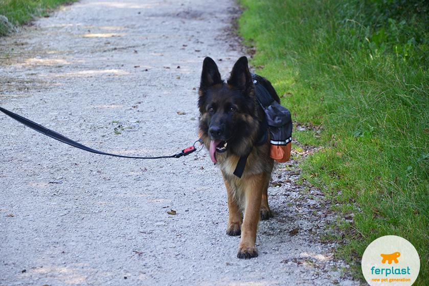 Fazendo trilha com o cão