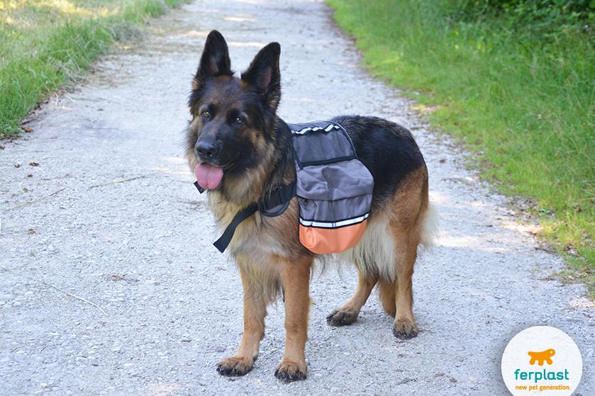 fazer trilha com o cão