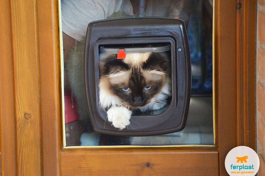 ferplast cat doors