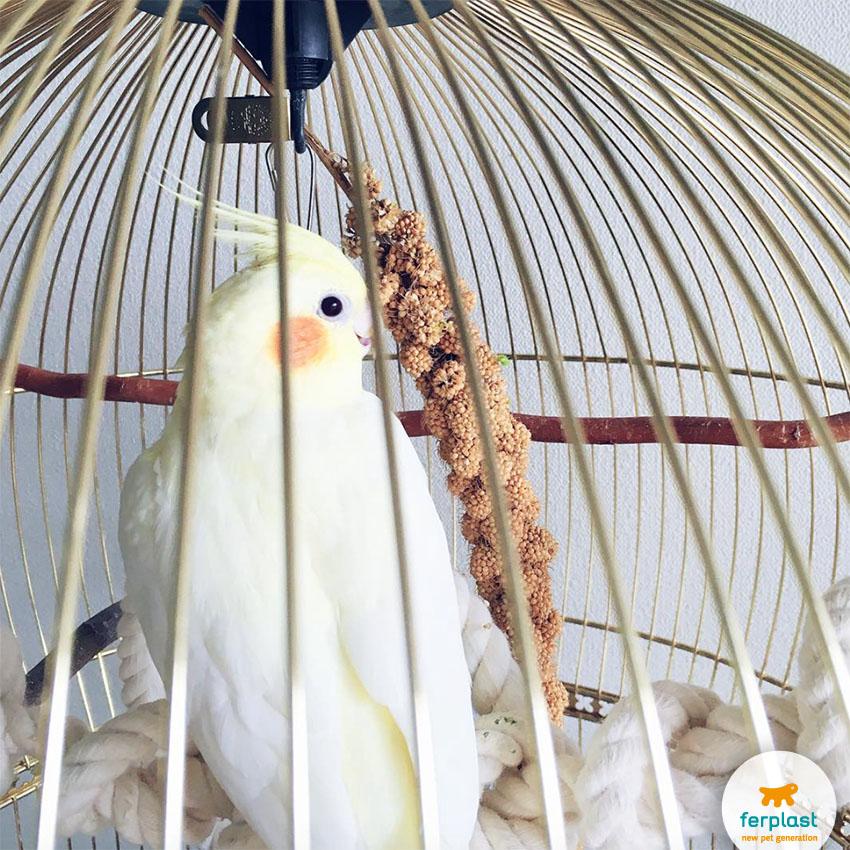 gabbia_uccelli_tonda_ferplast