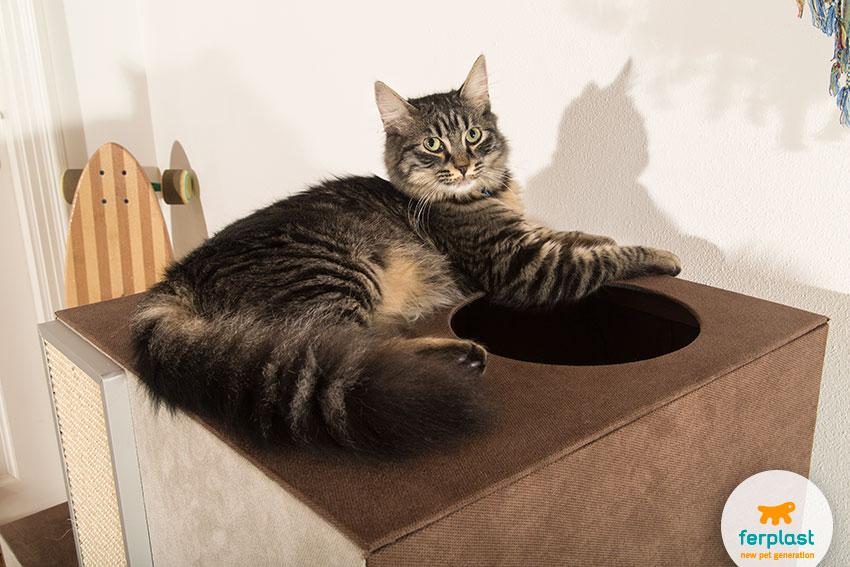 gatto sdraiato su mobile per gatti