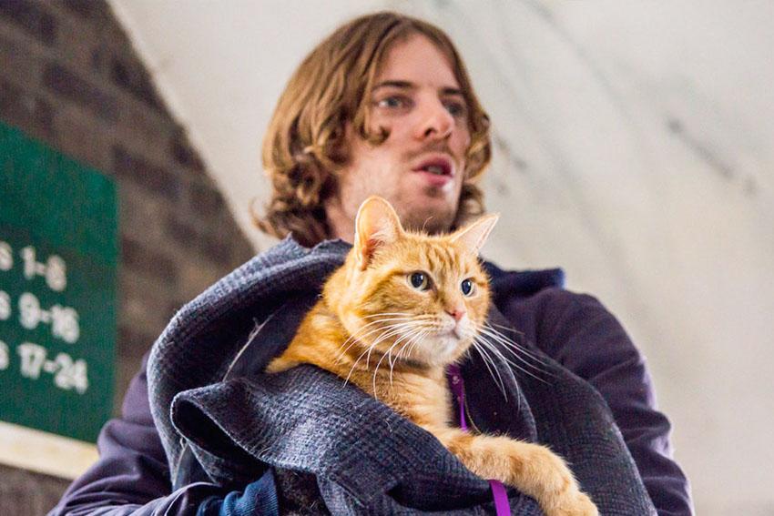 gatto_bob_film_trailer