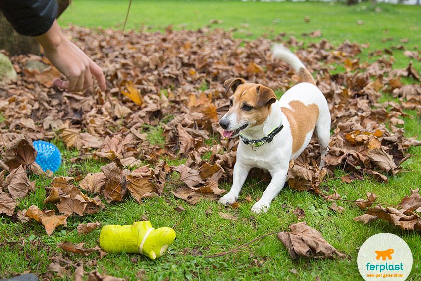giocare con il cane al riporto