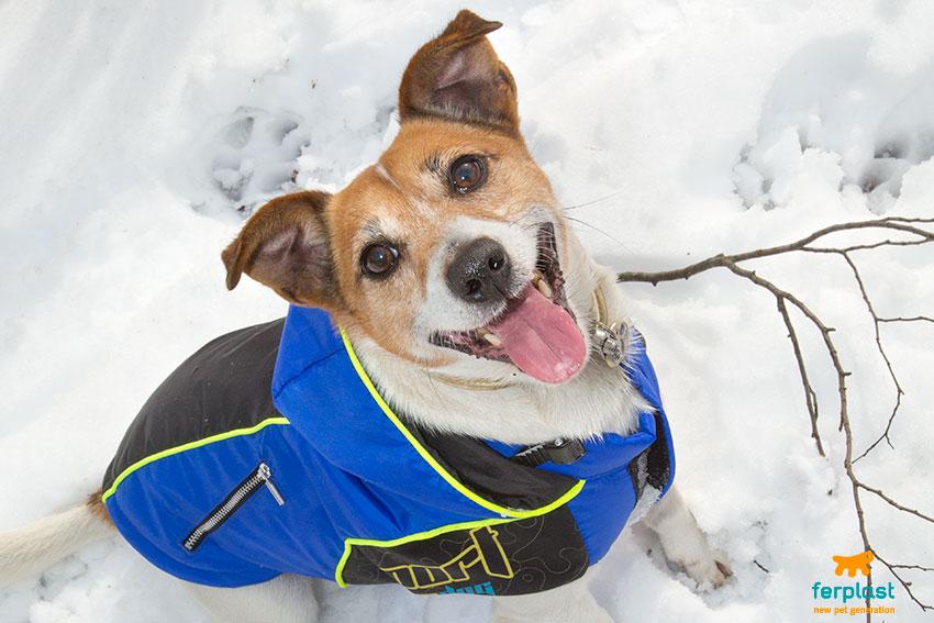 con il cane sulla neve