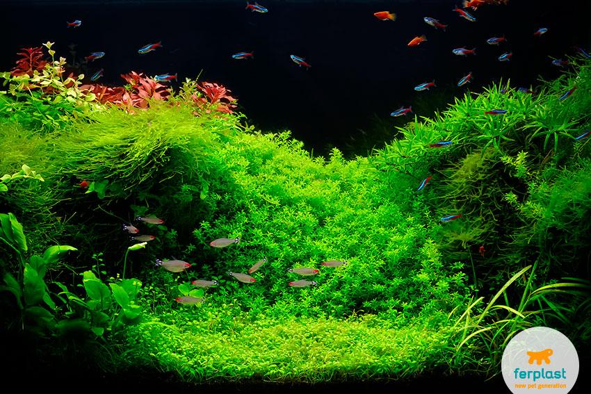 aquarium led or fluorescent tubes