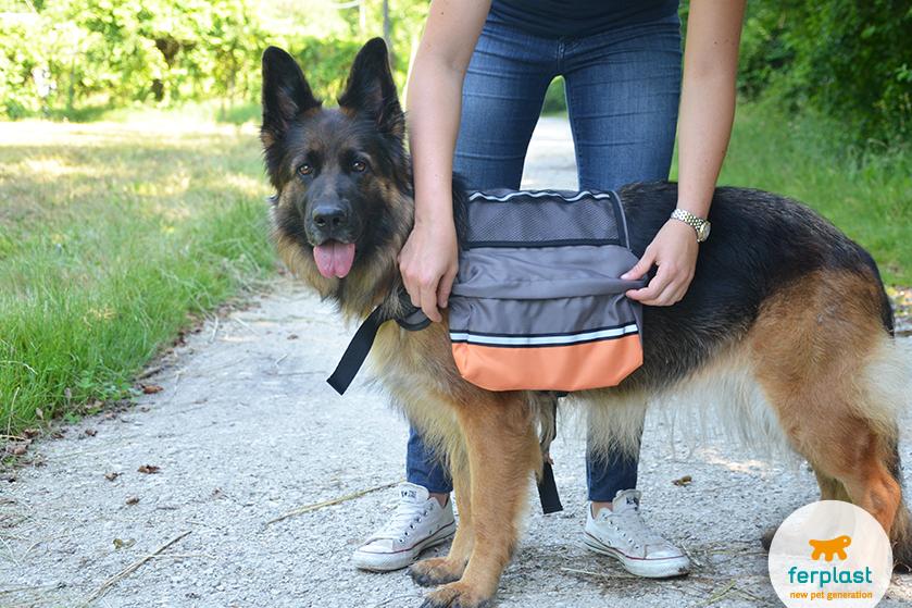 pastor alemao com uma mochila para caes