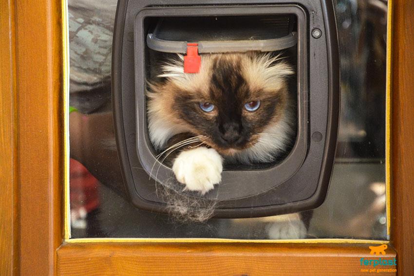 portine per gatti ferplast