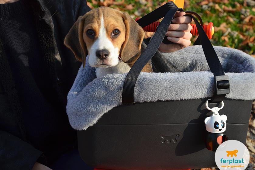 beagle_cucciolo_carattere