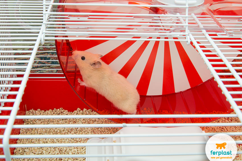 ideal hamster cage for christmas with a big wheel