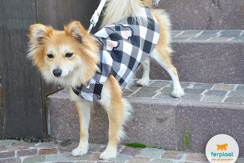 cappottino per cani elegante