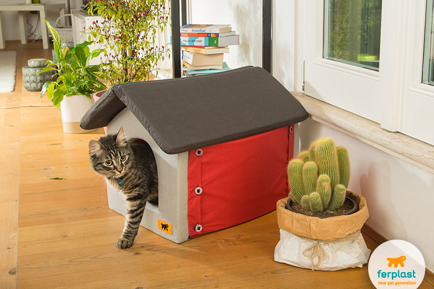 lovely cat home with the shape of a little house