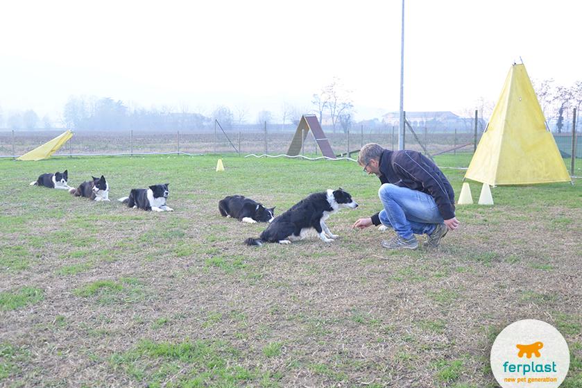 centro_addestramento_cuccioli_adottare_cane