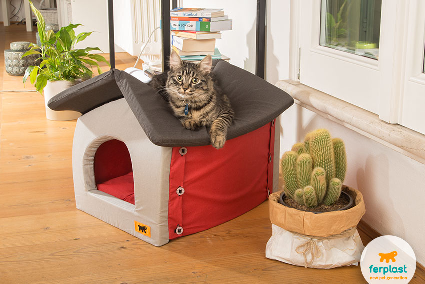 fashion and original cat igloo bed