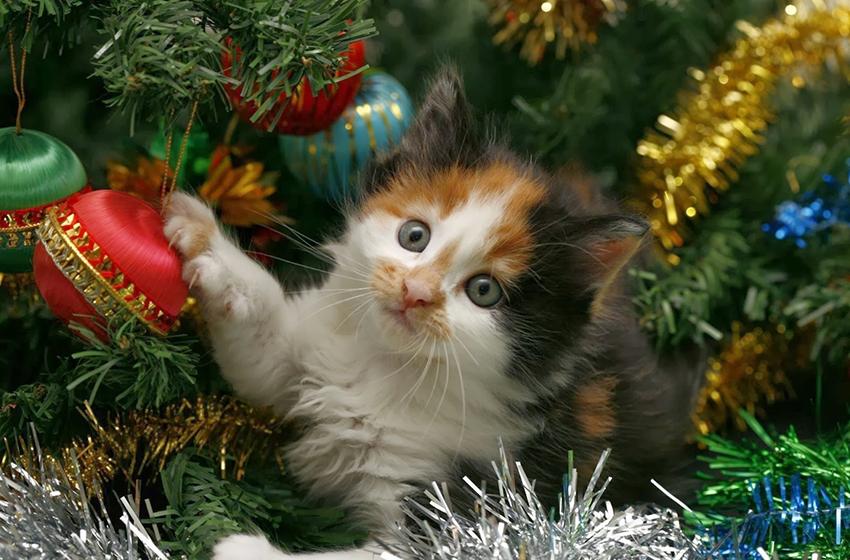 Decorazioni natalizie per gli amanti dei gatti love ferplast for Allontanare i gatti