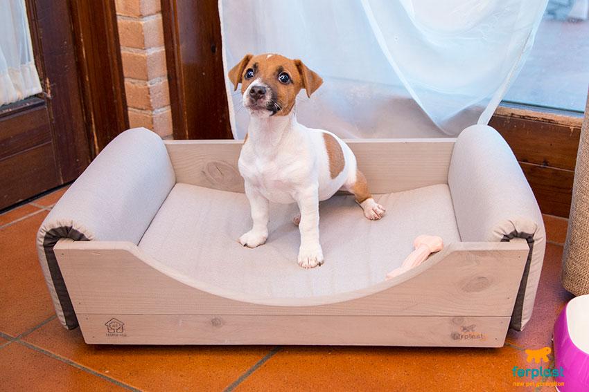 cosa serve al cucciolo nei primi mesi a casa