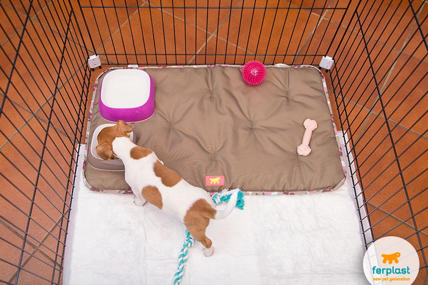 cosa serve al cucciolo nel recinto educativo per cani