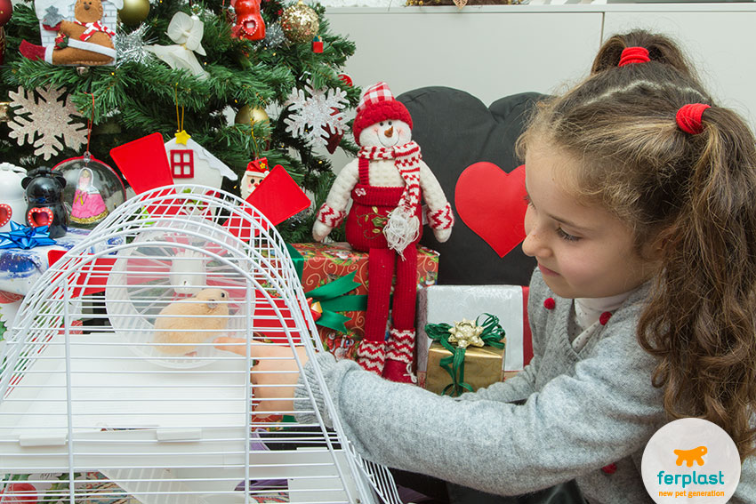 a hamster as a christmas gift