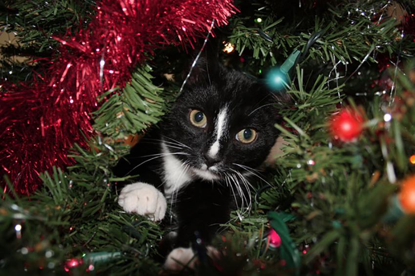 gatto_albero_natale