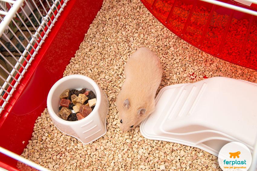 tigela de comida para hamster