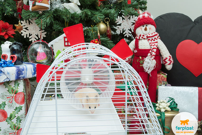hamster wheel in an original and funny hamster cage