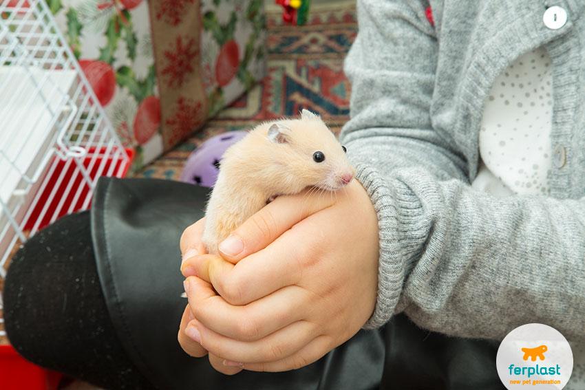 como manusear um hamster
