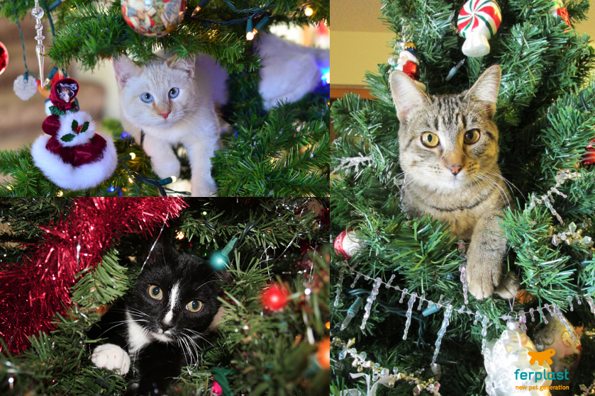 Christmas decorations for cat lovers love ferplast for Christmas cat yard decorations