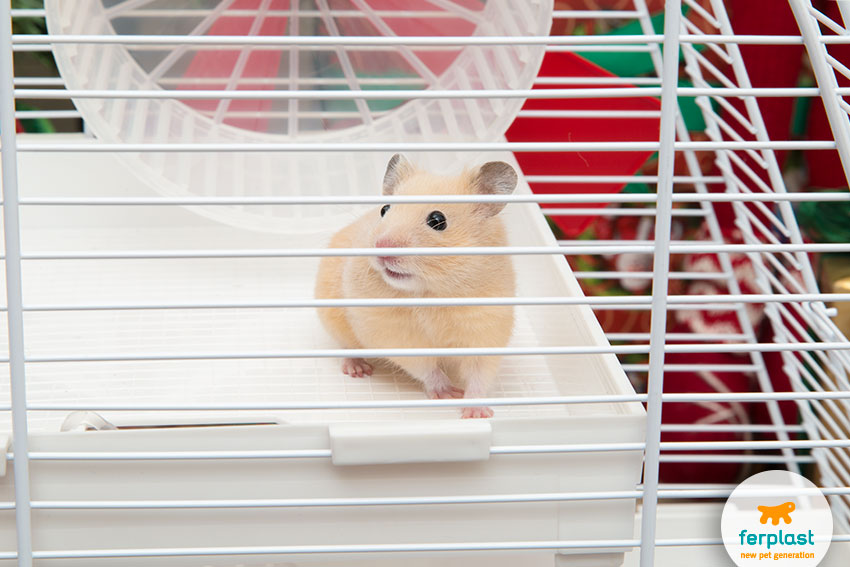 nice golden hamster in its cage
