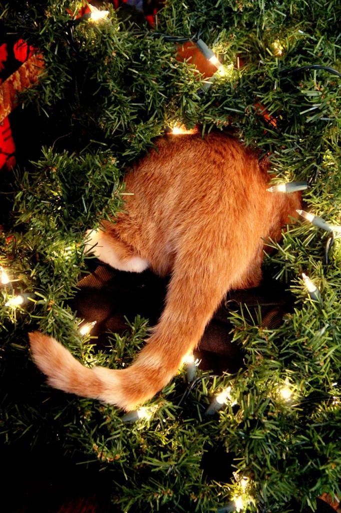 proteggere_albero_di_natale_gatto