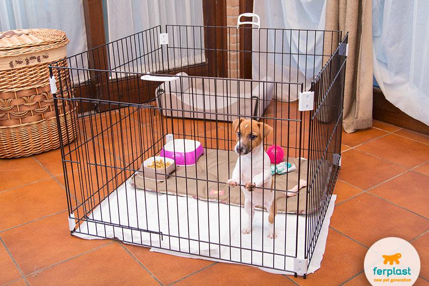 abituare il cucciolo a usare il recinto educativo per cani