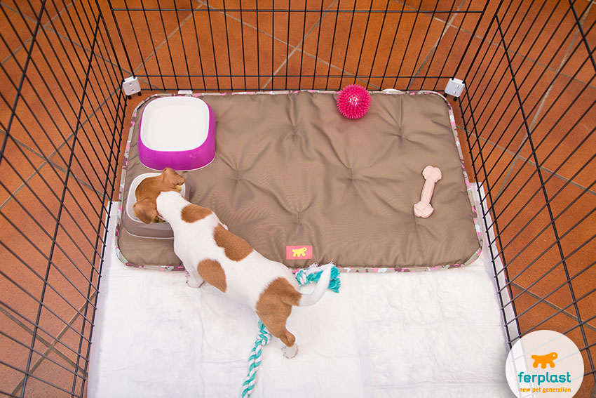 what does a puppy need during the first months at home