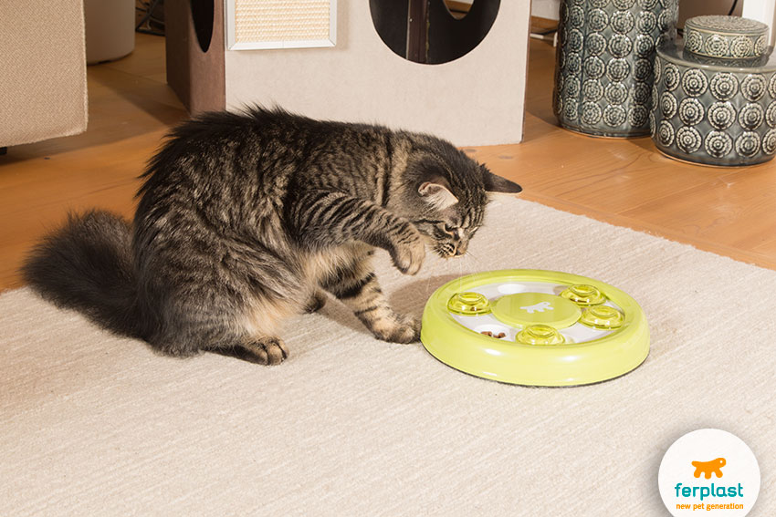 cute female cat playing with an interactive cat toy