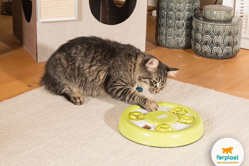 adorable female cat playing with a smart toy with food inside