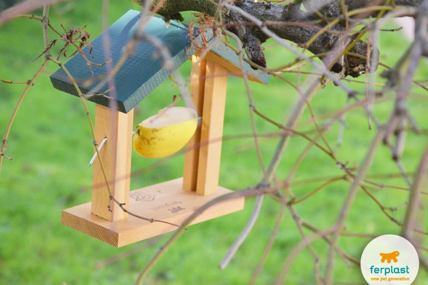 dare-da-mangiare-uccelli-giardino