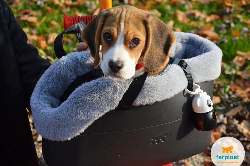 ferplast_beagle_razza_prezzo