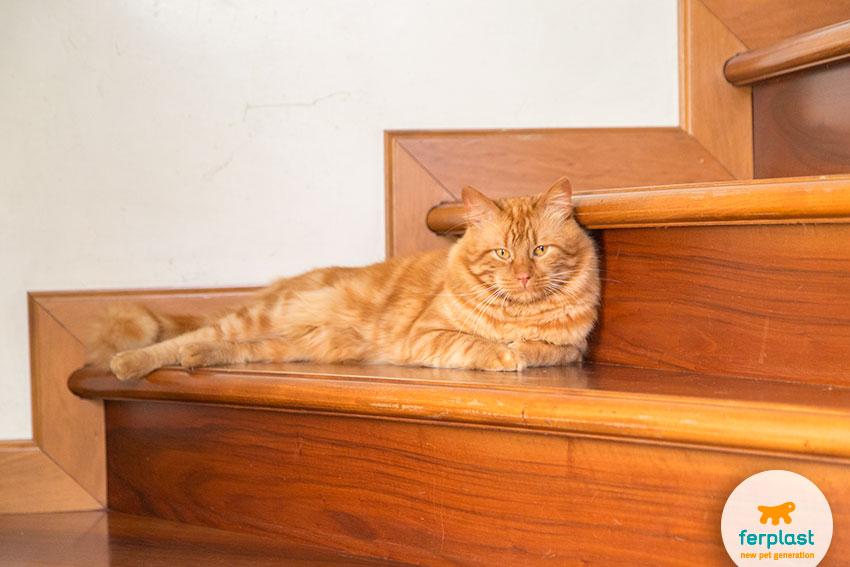 gatto rosso sdraiato sulle scale con sguardo fiero