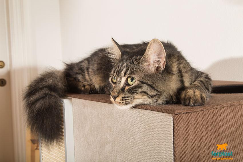 gatto che dorme sopra un mobile tiragraffi