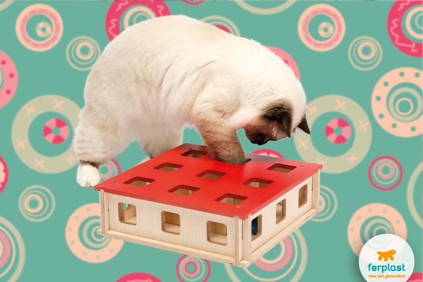gioco interattivo per gatti che stimola l'intelletto
