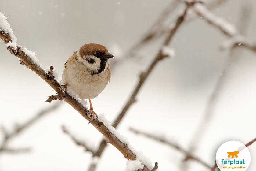 passero_uccello_giardino_cibo