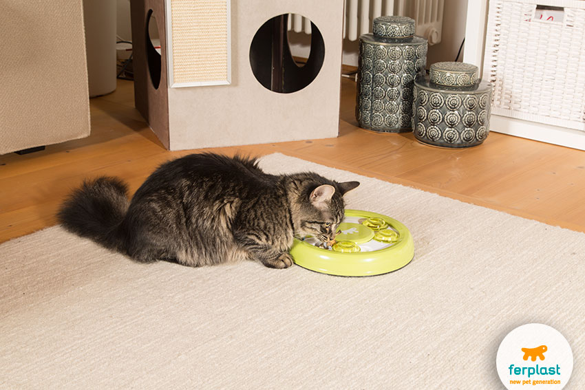 smart toys for cats' mental stimulation