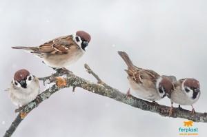 Gli Uccelli Selvatici E L Inverno Costruisci Nidi E Mangiatoie