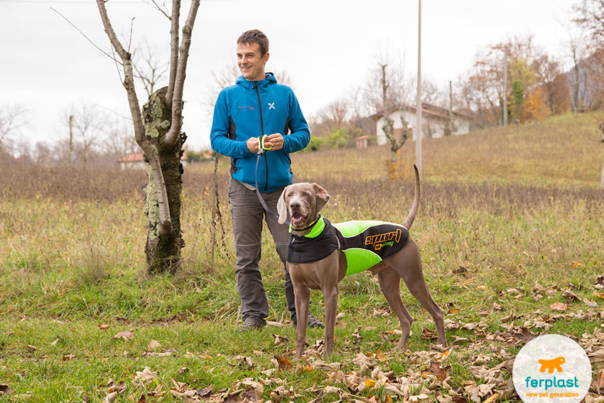 weimaraner breed personality and ideal owner