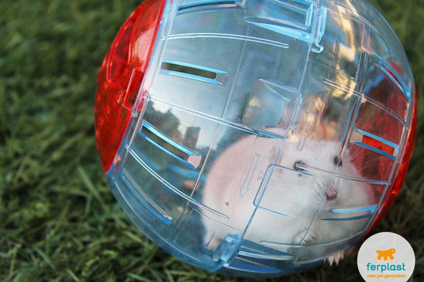bola de exercício para hamsters da ferplast