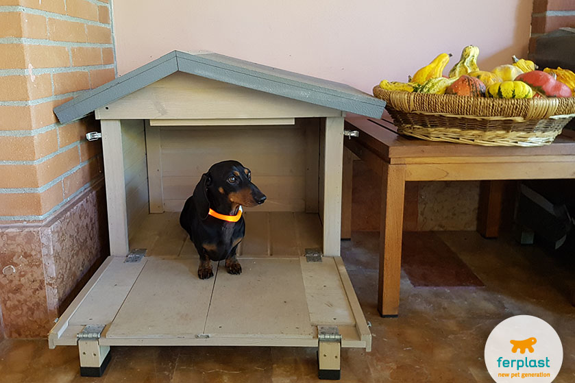 right dog house size for dachshunds