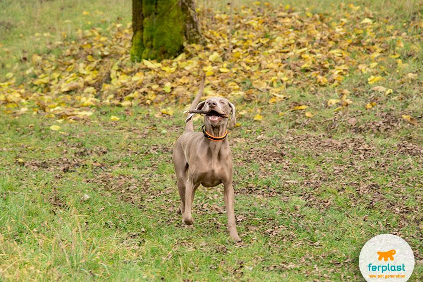 teaching a dog to fetch