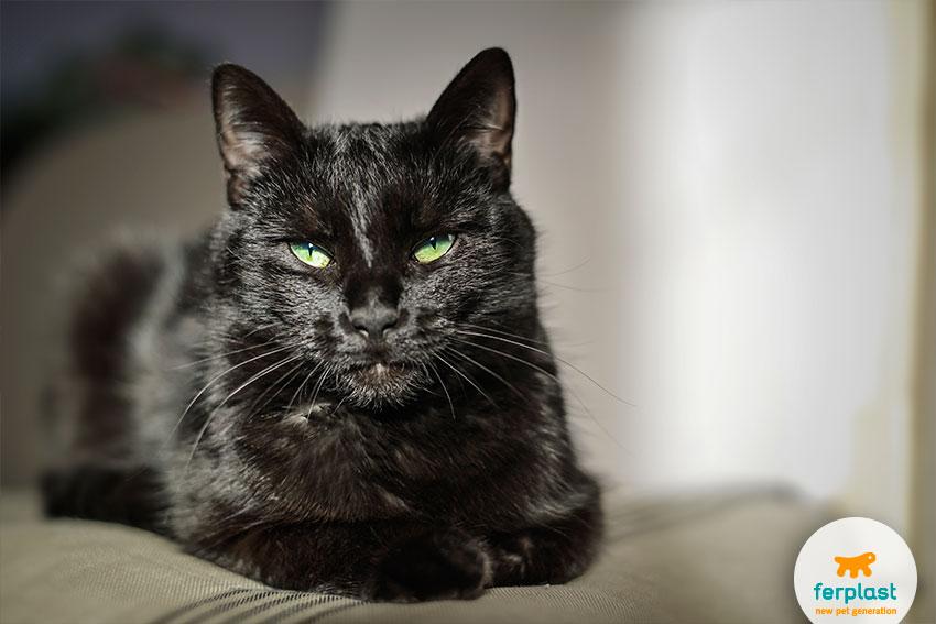 superstizioni sul gatto nero