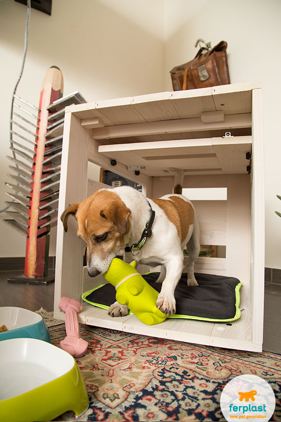 how to get the dog used to an indoor kennel