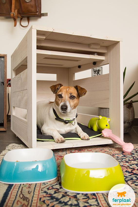 adorable jack russell dog inside a wooden indoor kennel